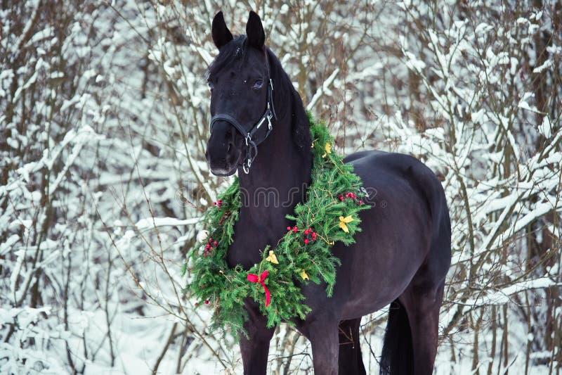 与圣诞节花圈的黑马 冬天 免版税库存图片