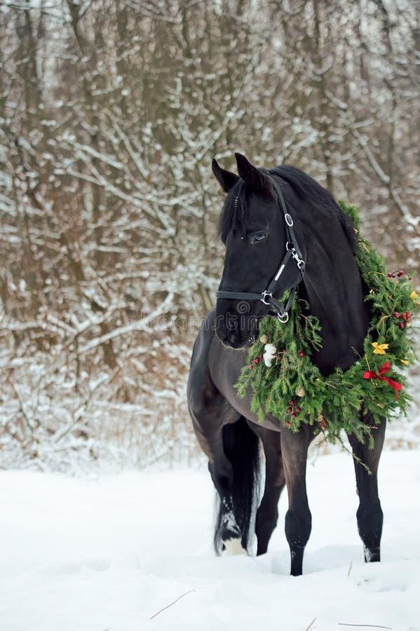 与圣诞节花圈的黑马 冬天 免版税图库摄影