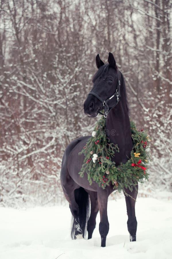 与圣诞节花圈的黑马 冬天 库存照片