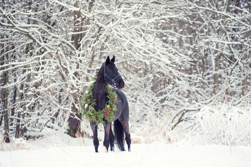 与圣诞节花圈的黑马 冬天 库存图片