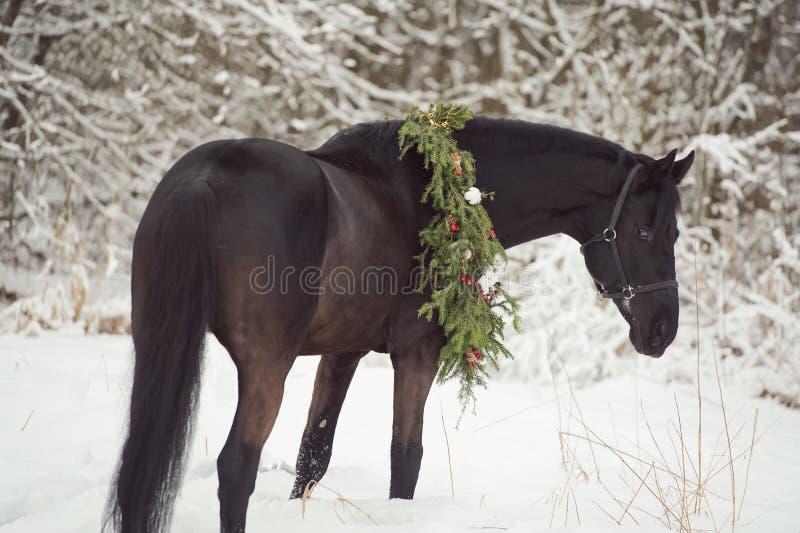 与圣诞节花圈的黑马 冬天 免版税库存照片