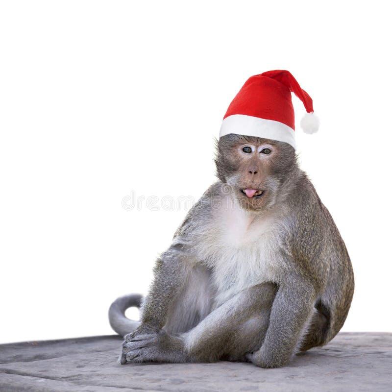 与圣诞节被隔绝的圣诞老人帽子的长尾的短尾猿猴子  库存照片