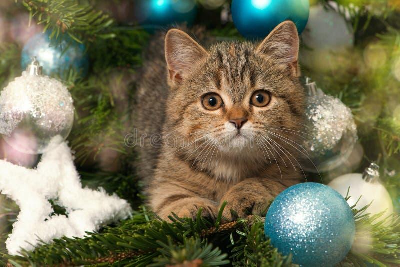 与圣诞节装饰的小的平纹小猫 免版税库存图片