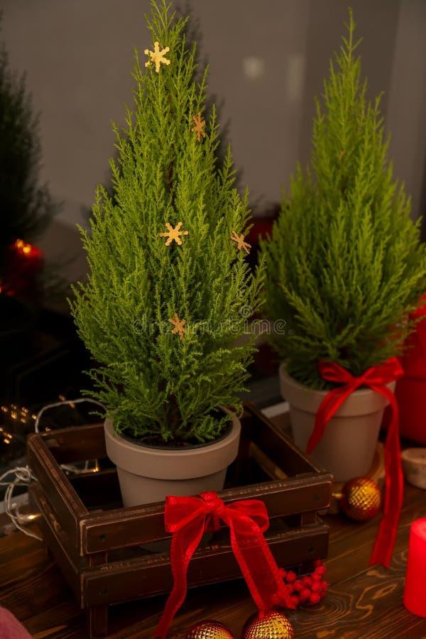 与圣诞装饰的Thuya树在窗台 免版税库存图片