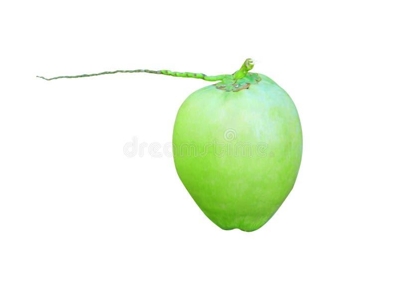 与在与裁减路线的白色背景在垂直隔绝的茎的新鲜的绿色椰子 库存图片