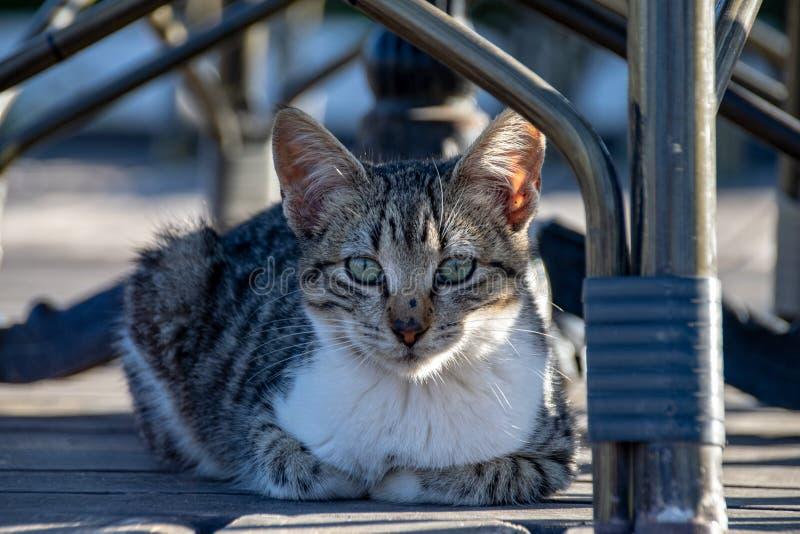 与在卷曲的爪子的虎斑猫小猫坐装饰在桌下和椅子在夏天 库存图片