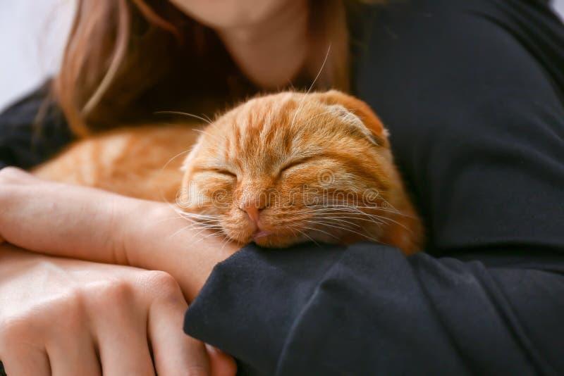 与在家休息的所有者的逗人喜爱的苏格兰折叠猫 免版税库存照片