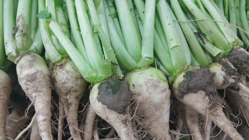 与在市场上安置的绿色叶子的白色萝卜根 图库摄影