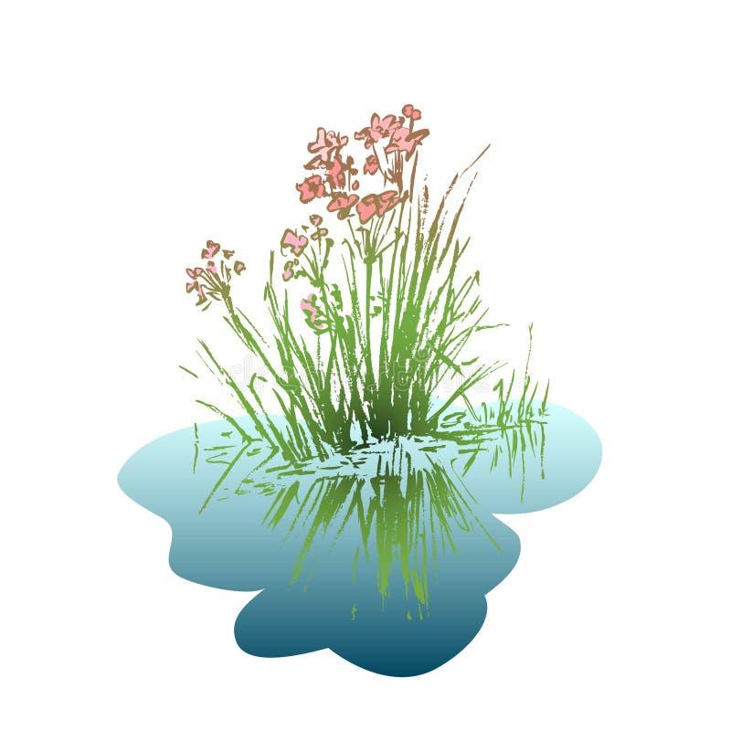 与在水反映的叶子的花 库存例证