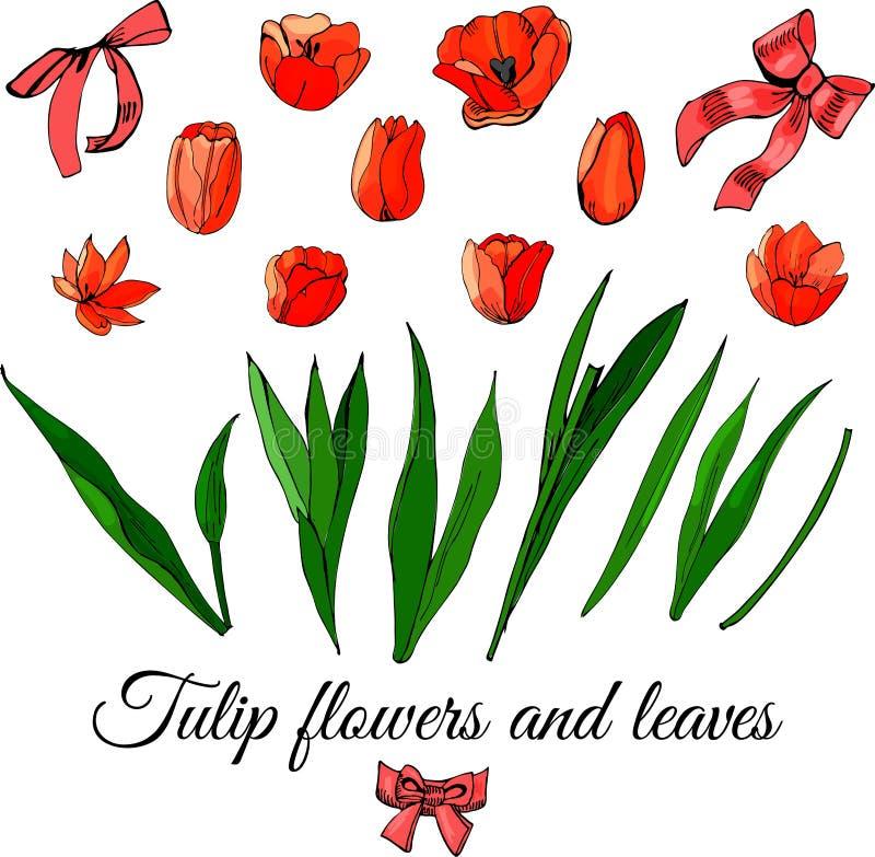 与在白色背景和弓的被设置的手拉的色的剪影隔绝的郁金香花、叶子 库存例证
