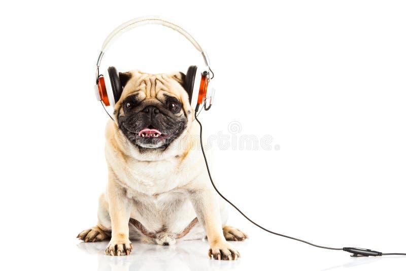 与在白色背景狗创造性的工作隔绝的耳机的哈巴狗狗 库存照片
