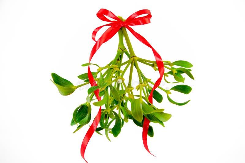 与在白色背景隔绝的丝带的绿色槲寄生 圣诞节概念 库存图片