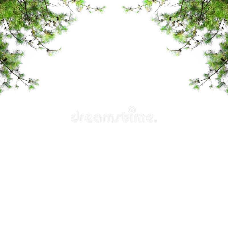 与在白色背景隔绝的冷杉分支的圣诞节边界 与空格的松树框架 免版税库存图片