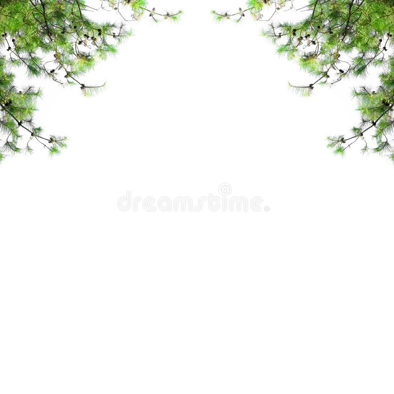与在白色背景隔绝的冷杉分支的圣诞节边界 与空白的杉树框架 免版税图库摄影