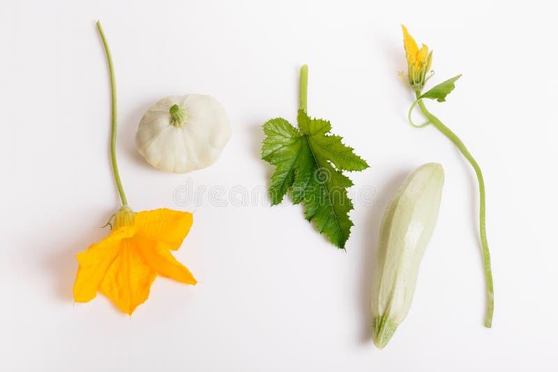 与在白色背景隔绝的切片的新鲜的绿色夏南瓜 库存照片