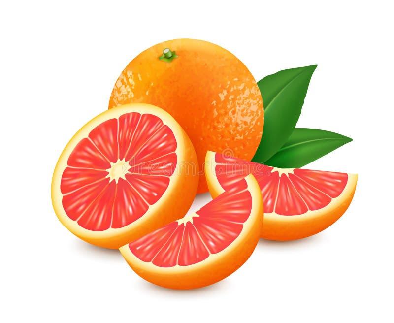 与在白色背景隔绝的叶子的新鲜的葡萄柚 可实现的向量例证 3D传染媒介图象 皇族释放例证