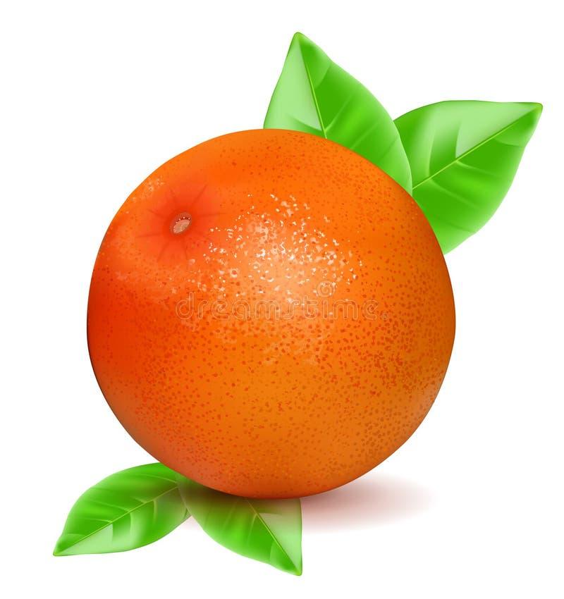 与在白色背景隔绝的叶子的橙色葡萄柚 也corel凹道例证向量 库存例证