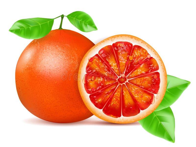 与在白色背景隔绝的叶子的橙色葡萄柚 也corel凹道例证向量 皇族释放例证