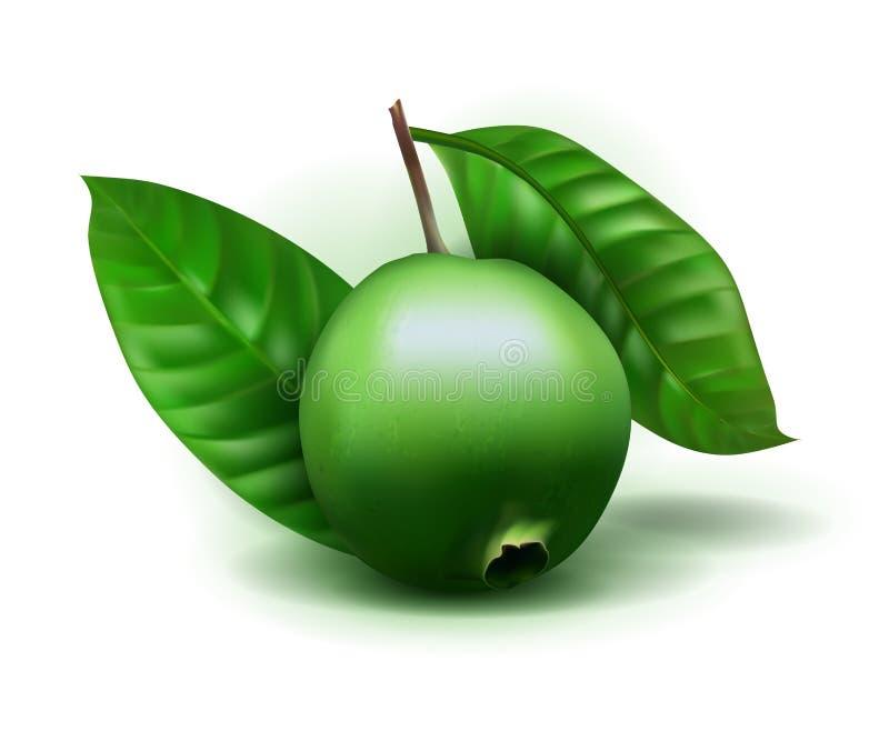 与在白色背景隔绝的叶子的照片现实Alibertia可食3d传染媒介果子 Alibertia可食在家庭Rubiacea 向量例证
