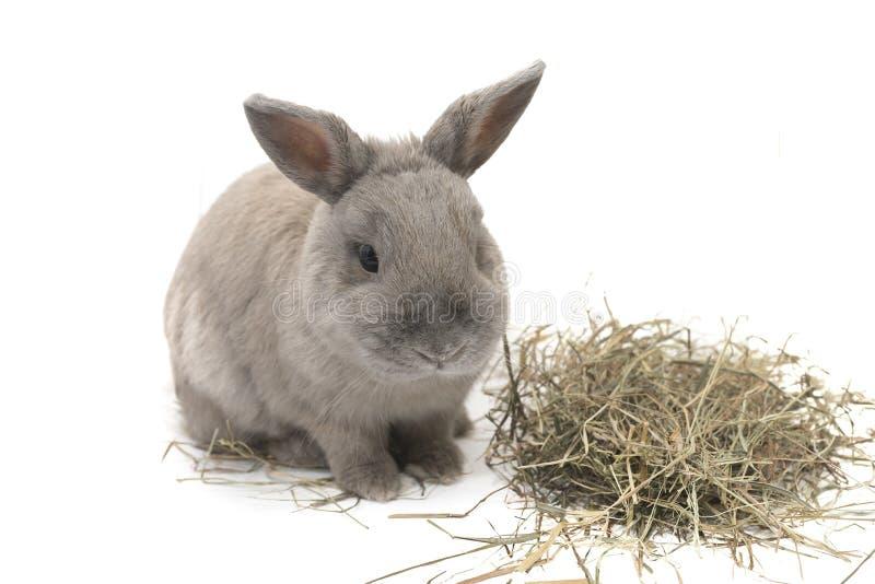 与在白色背景隔绝的干草的逗人喜爱的装饰兔子 免版税库存图片