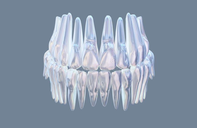 与在白色背景隔绝的牙解剖学模型医疗例证的人的下颌 3d例证 皇族释放例证