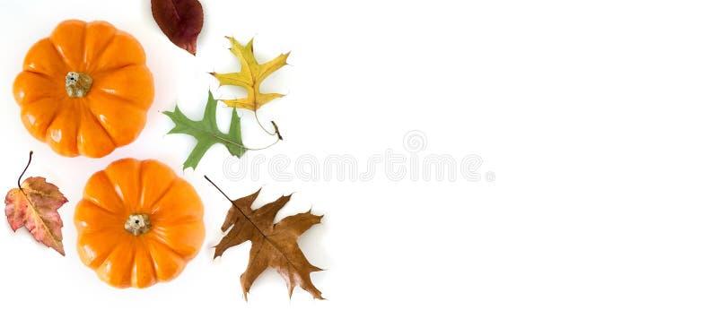 与在白色背景隔绝的秋叶的南瓜,从上面的看法 感恩概念 长的宽横幅 库存图片