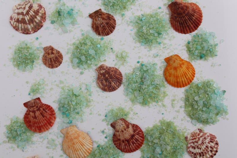 与在白色背景隔绝的绿浪盐的海壳 库存照片