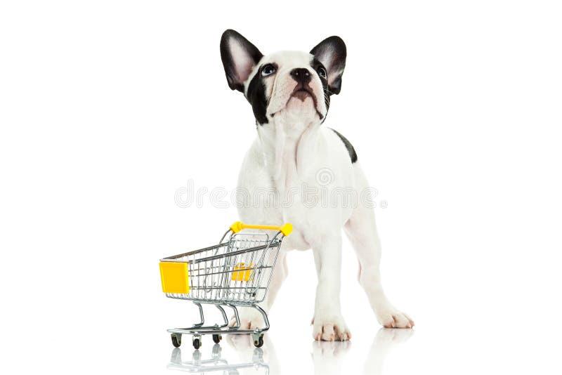 与在白色背景隔绝的购物台车的狗 免版税库存照片