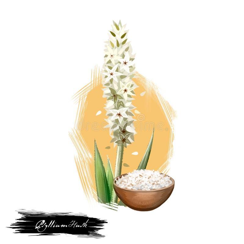 与在白色隔绝的文本的Isabgol蚤草果壳车前草属ovata ayurvedic草本数字式艺术例证 健康有机温泉计划 库存图片
