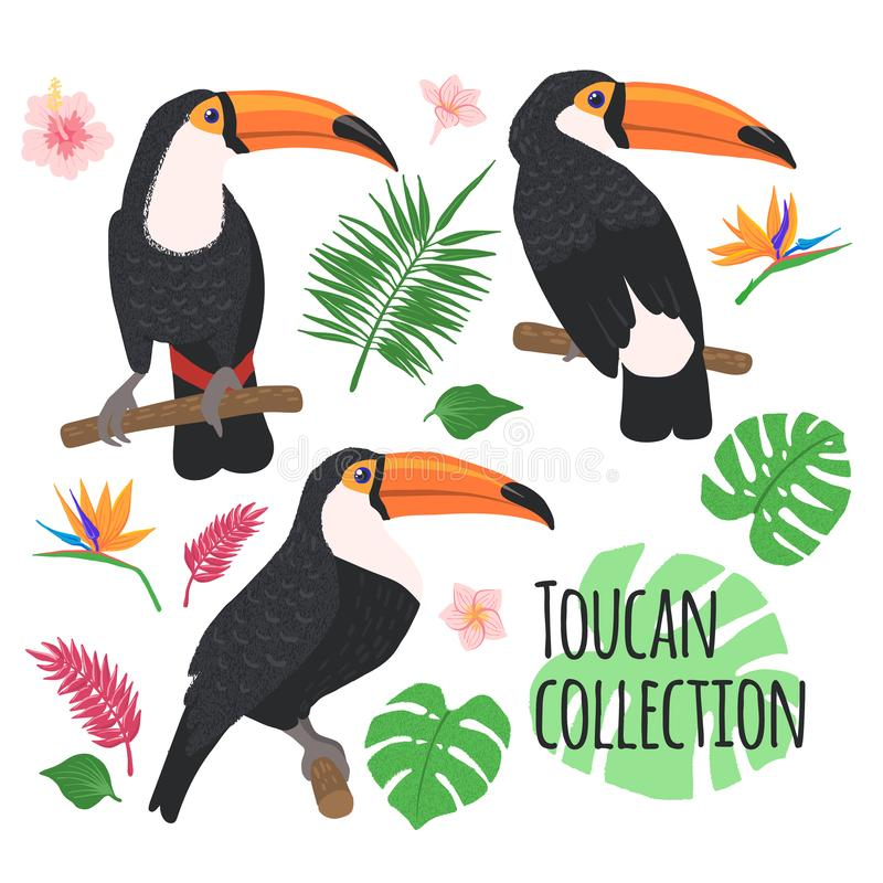 与在白色隔绝的热带元素的Toucans 库存例证