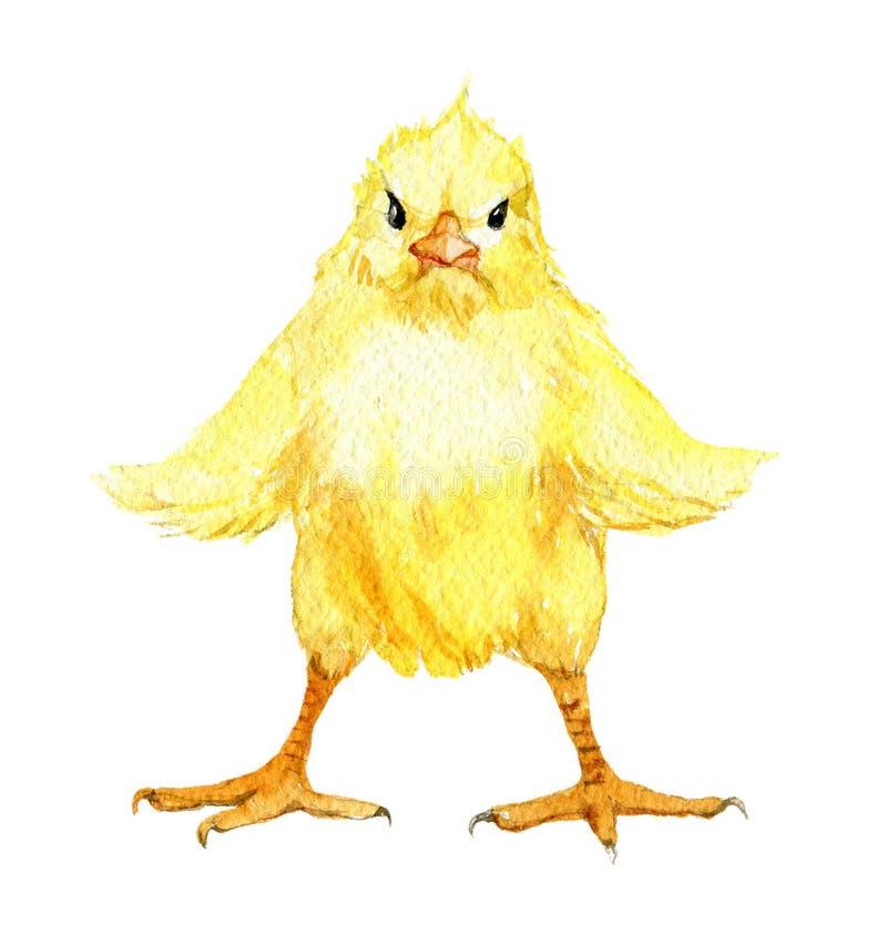 与在白色隔绝的被涂的翼,水彩例证的逗人喜爱的小鸡 库存例证