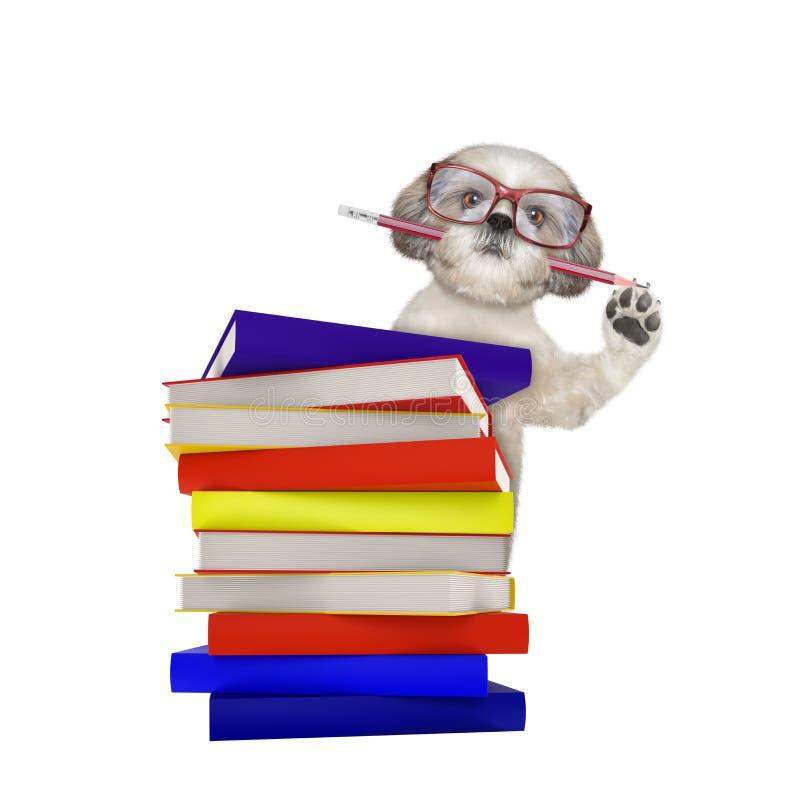 与在白色隔绝的书的逗人喜爱的聪明的狗 免版税库存图片