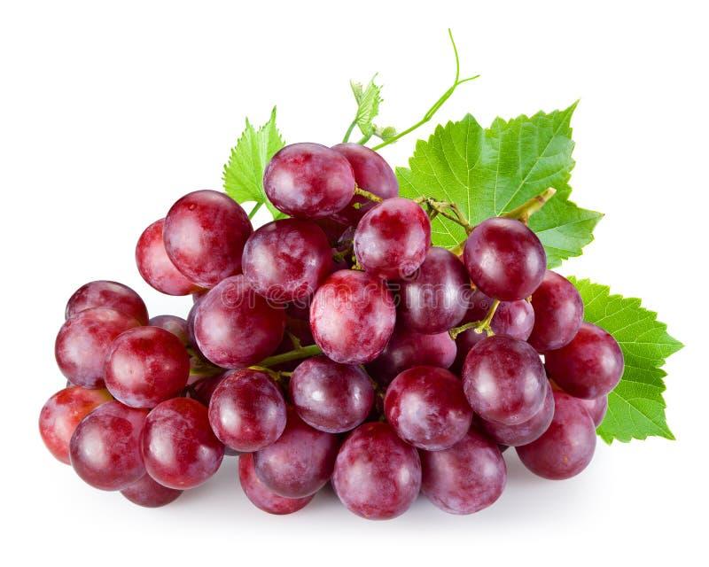 与在白色隔绝的叶子的成熟红葡萄 免版税库存图片