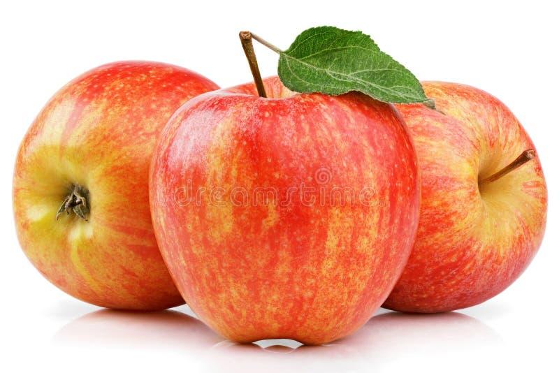 与在白色隔绝的绿色叶子的成熟红色黄色苹果 库存图片