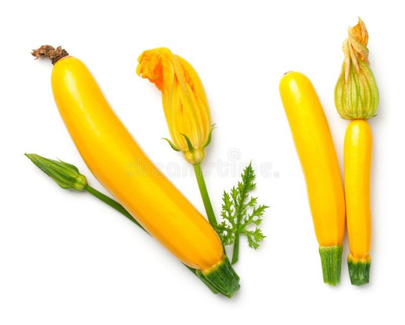 与在白色Backgroun和花的黄色夏南瓜隔绝的叶子 免版税库存照片