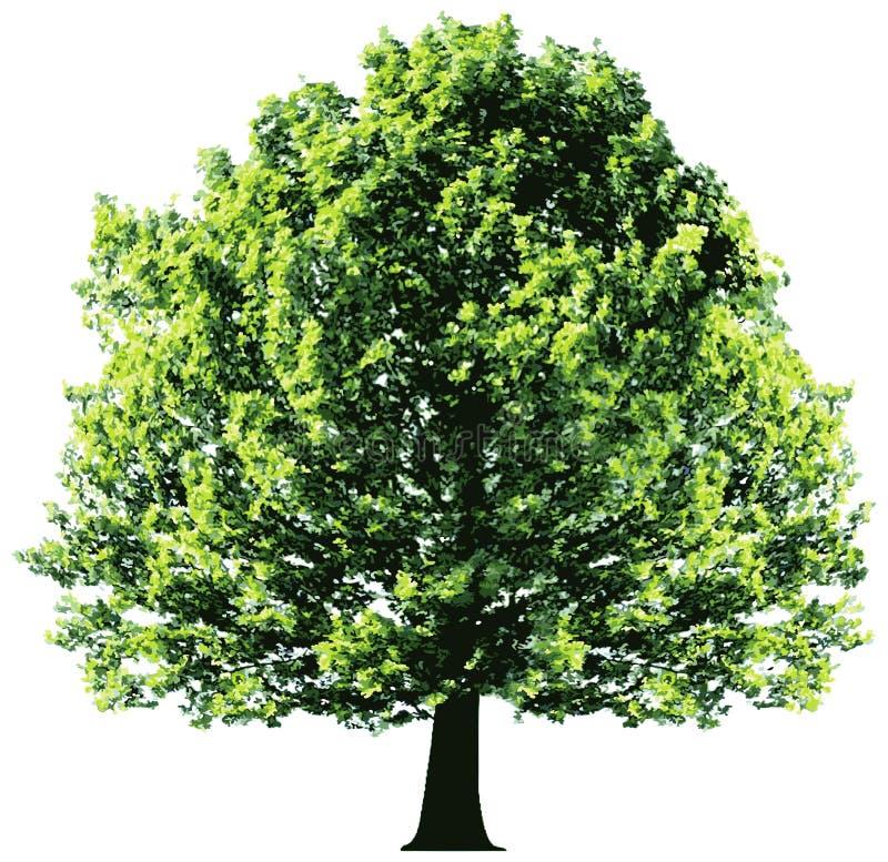 与在白色backgroun隔绝的绿色叶子的树 向量例证