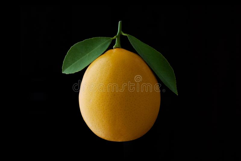 与在黑背景隔绝的叶子的柠檬果子 库存图片