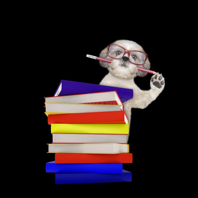 与在黑色隔绝的书的逗人喜爱的聪明的狗 免版税库存图片
