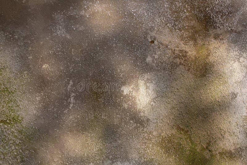 与地衣的树皮纹理 免版税库存照片