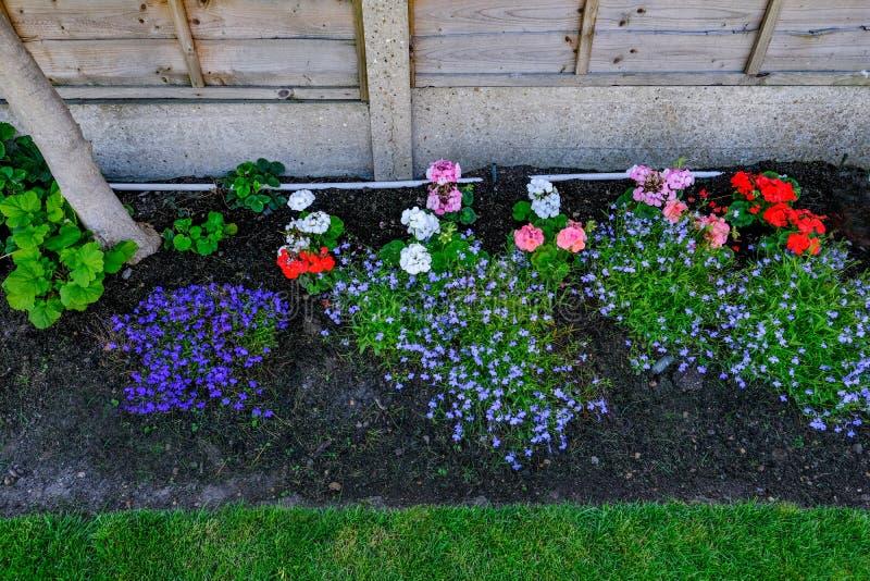 与地貌面的花床特写镜头在初夏 免版税库存照片