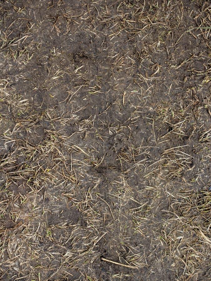 与地面的干草backgSeamless纹理的黑土壤用干草本 免版税库存图片