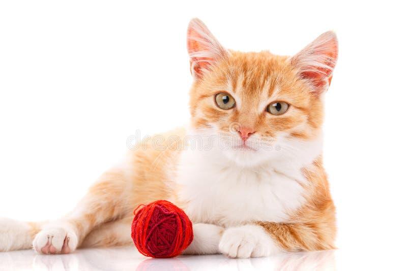 与坐在玩具旁边的白色爪子的逗人喜爱的橙色小猫 库存图片