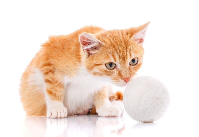 与坐在玩具旁边的白色爪子的逗人喜爱的橙色小猫 免版税库存图片