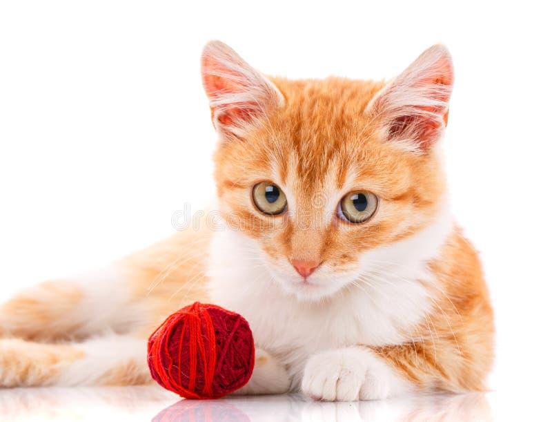 与坐在玩具旁边的白色爪子的逗人喜爱的橙色小猫 库存照片