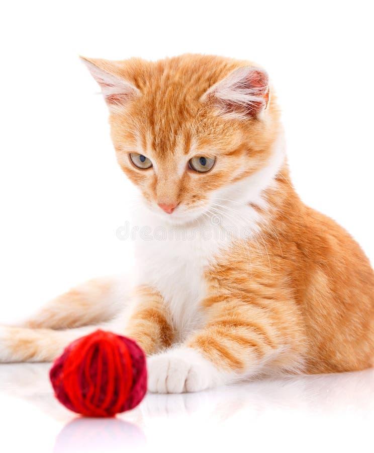 与坐在玩具旁边的白色爪子的逗人喜爱的橙色小猫 图库摄影