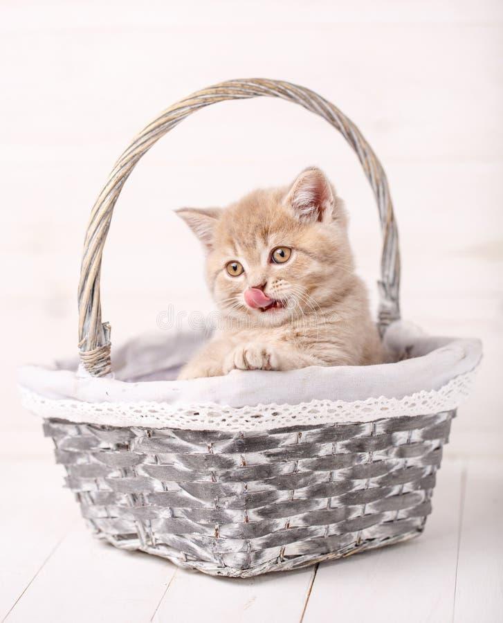 与坐在篮子的黄色眼睛的猫 免版税图库摄影