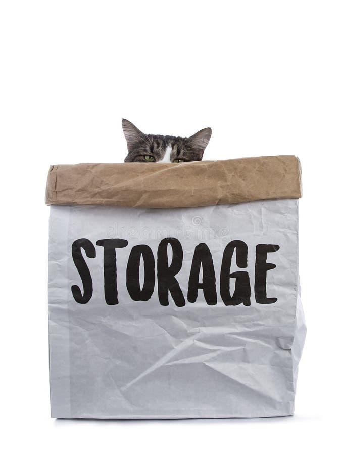 与坐在纸存贮袋子的白色挪威森林猫的黑平纹锐化与给在边缘的嫉妒催眠秘密审议 免版税库存图片
