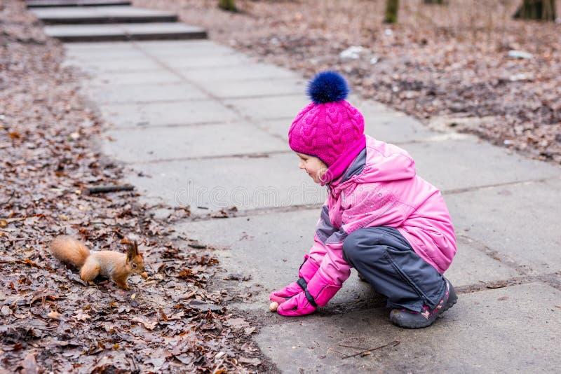 与坚果的小女孩哺养的灰鼠在森林里 图库摄影