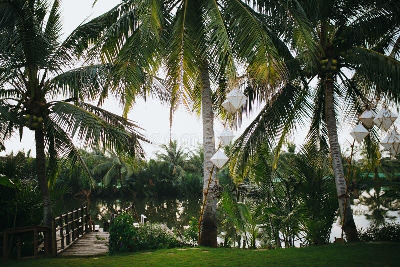 与垂悬在分支和镇静池塘的白色灯笼的美丽的绿色棕榈树在公园, Hoi 免版税库存图片