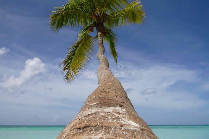 与垂悬在加勒比海的海岸的一根长的树干的棕榈树 沈默、和平和天堂 ?? 库存图片